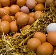 Fertile parrots eggs and incubators for sale